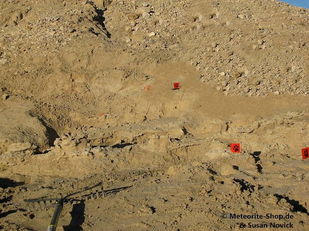 Streufeld der Fulgurite in der Mojave-Wüste